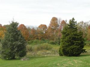 Ohio fall leaves