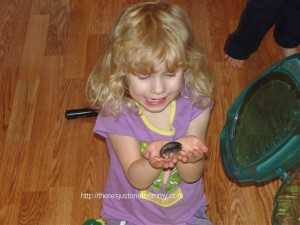 pet salamander