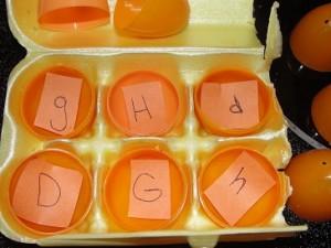 plastic egg uses