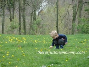 kids and dandelions