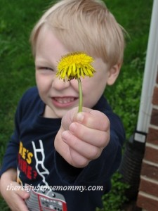 collecting dandelions