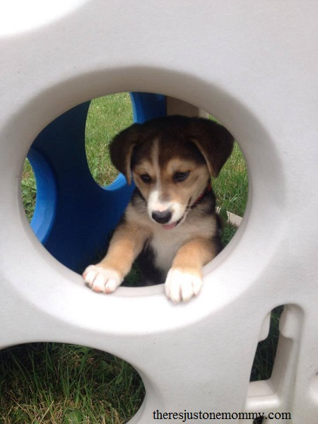 tips for introducing a new puppy to kids
