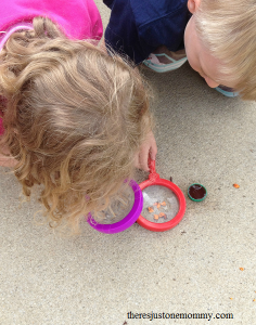 observing ants -- simple science