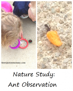Nature Study: ant observation