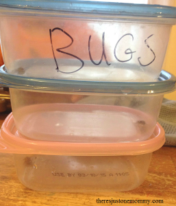 bug houses for nature study