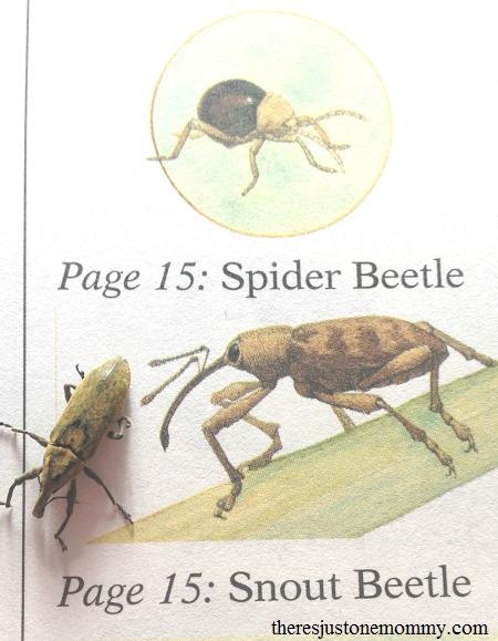 identifying bugs in bug study
