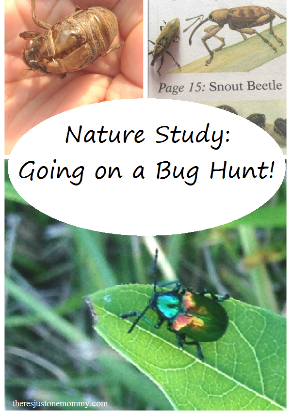 Nature Study: Going on a Bug Hunt!