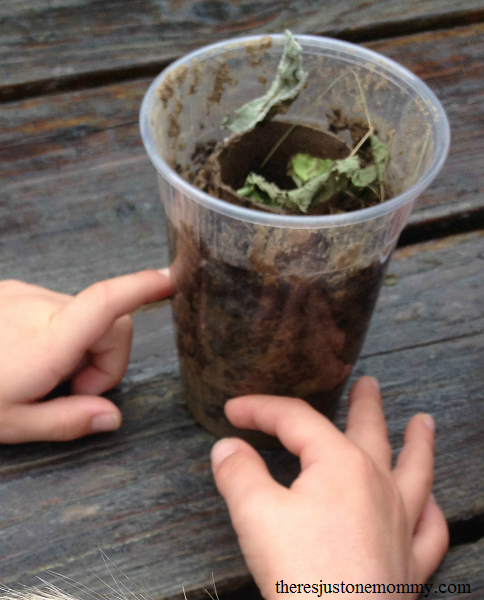 how to make a simple wormery