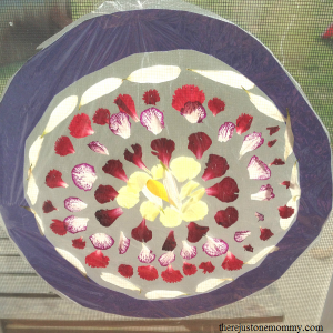 simple flower petal suncatcher -- kids flower craft