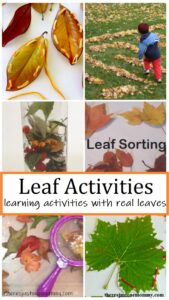learning activities with real leaves