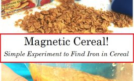 Magnetic Cereal!  Extract Iron from Breakfast Cereal